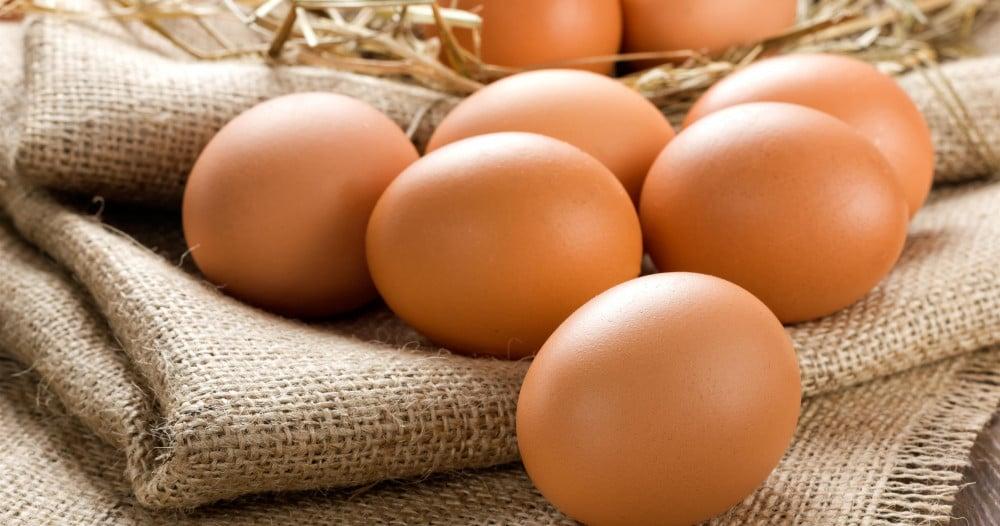 œuf bio et plein air