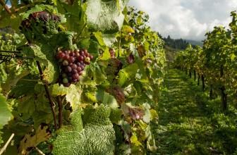 Evadez-vous dans les vignobles du Muscadet cet automne